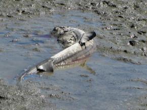 """Any photos used should be credited to """"Richardson Bay Audubon Center"""""""