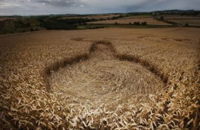 crop-circles-have-appeared-in-a-field-in-northumberland-457811720
