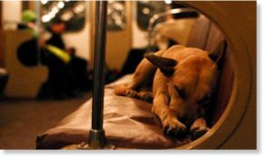 Moscow_Train_Dog_1