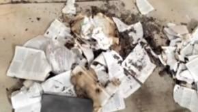 Burned-Bibles-300x170