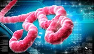 ebola-kits-665x385